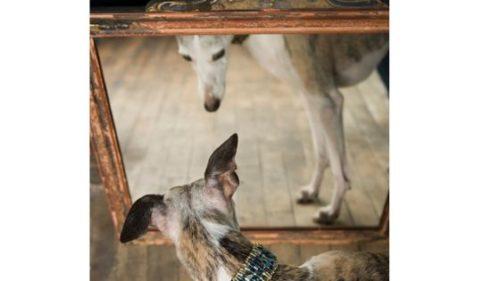 pies i lustro - Jak widzimy otaczający nas świat